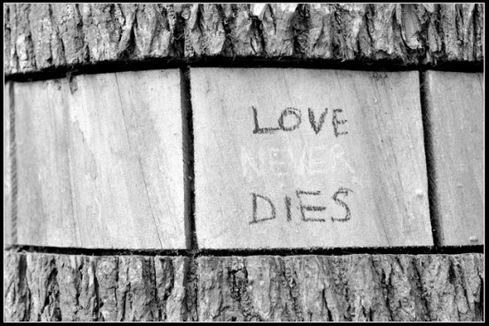 A black and white photo of a tree trunk on which someone has written 'love never dies'. This photo accompanies an article about relationships with large age gaps.