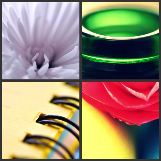 macro photography collage