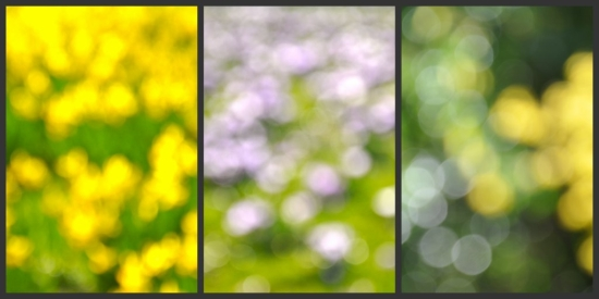collage of bokeh from spring flowers