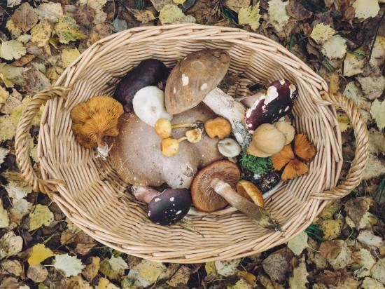 A basket full of assorted mushrooms