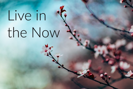 Pink blossoms on a blue background with the slogan 'live in the now'
