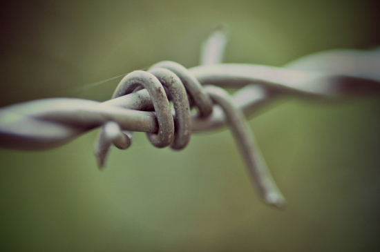 barbed wire macro photography