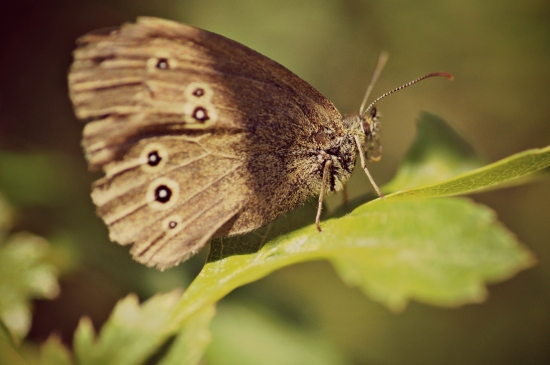 macro photography butterfly