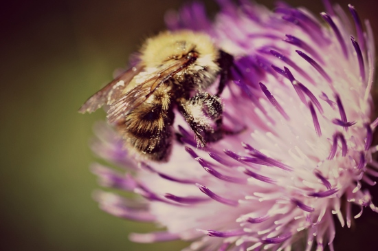 macro photography bee