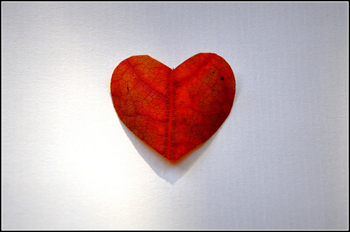 heart made of leaf
