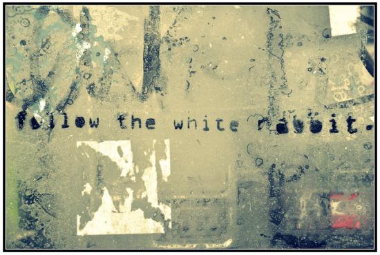 street art follow the white rabbit