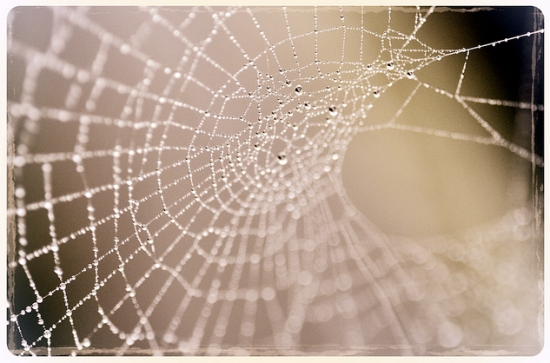 macro photography spiders web