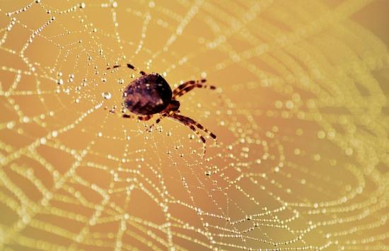macro photography spiders web