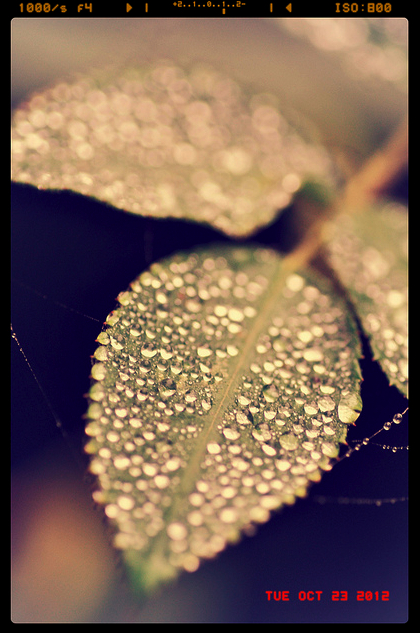 macro photography raindrops