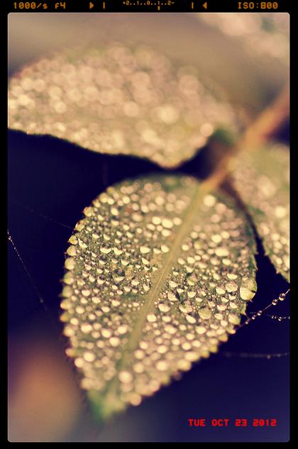 macro photography raindrops