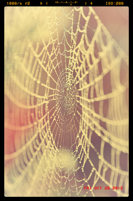 spiders web with dew drops