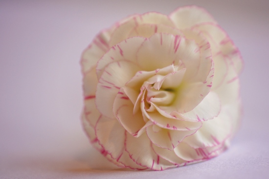 macro flower shot