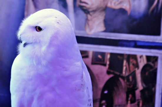 Hedwig Harry Potter Films