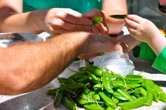 shelling green garden peas