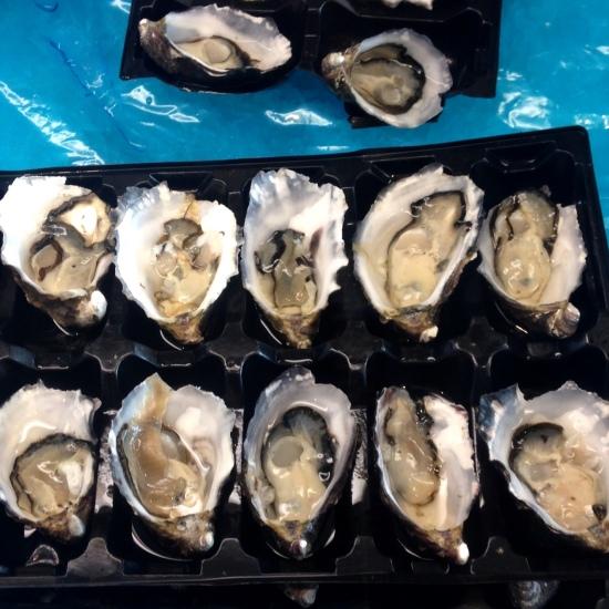 oysters hobart tasmania