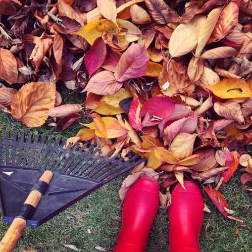raking up autumn leaves in red wellies