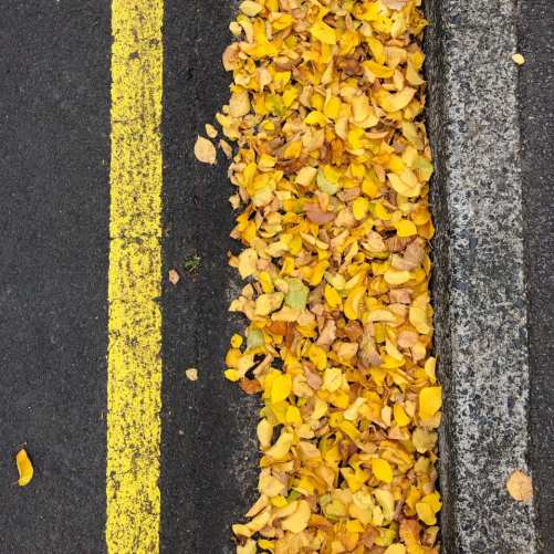 yellow leaves and road markings in Hobart Tasmania
