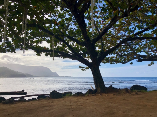 The beachfront view featuring a large tree at Princeville Resort Kauai, HAwaii
