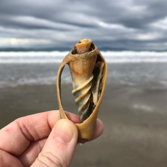 A hand holding a shell up with the sea as a background at Seven Mile Beach in tasmania